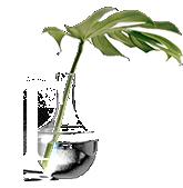 Tree care consultant